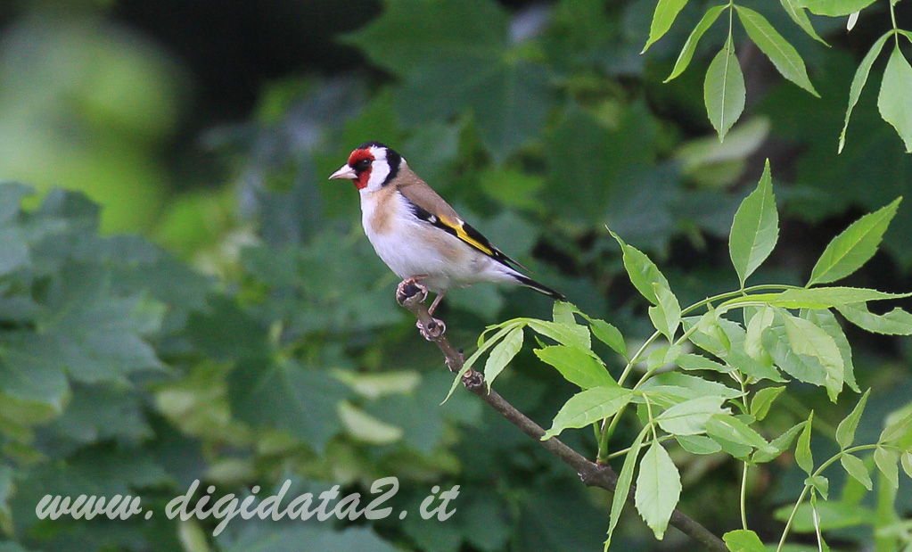 natura-217